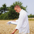 Agriculture scientist in the field checking results of experiment — 图库照片