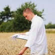 Foto Stock: Agriculture scientist in the field checking results of experiment