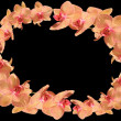 Pink Orchids on dark background arranged as wreath - Stock Photo