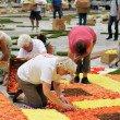 Stock Photo: BRUSSELS, BELGIUM-AUGUST 14: Unidentified volunteers of different ages arrange flowers for Flower Carpet 2012 on August 14, 2012 in Brussels. This biennial event