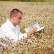 Young specialist checking results of his experiment in the wheat field — Foto de Stock