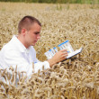 Young specialist checking results of his experiment in the wheat field — Stok fotoğraf