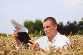Student checks results of his experiment in the wheat field — Stok fotoğraf