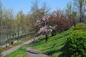 Parc on the high side of river Po in Turin — Stock Photo