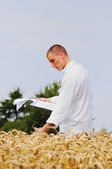 Agronomist checking results of his experiment — Stock Photo