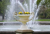 Vase with flowers in city garden in Koeln — Stockfoto