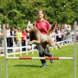 Agility competitions — Stock Photo