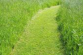 Pathway on green field — Stock Photo