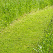 Pathway in green grass — Stock Photo