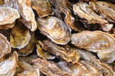 Oysters in tray — Stock Photo