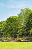 Rhododendrons in parc — Stock Photo