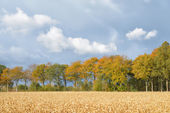 Quiet autumn scene with wheat field — Stock Photo