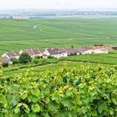 Typical landscape in Champagne-Ardenne, France with vineyards — Stock Photo