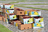 Prepared for the Flower Carpet creation one million of begonias in boxes on Grand Place — Stock Photo
