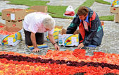 Volunteers continue their work on the Flower Carpet on Grand Place — Stock Photo