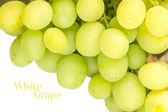 White table grape isolated on white background — Stock Photo