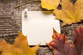 Blank paper sticker with autumn leaves on old wood background — Stock Photo