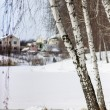 Snowy winter landscape with birch trees — Stock Photo