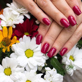 Woman's hands with bunch of flowers — Stock Photo