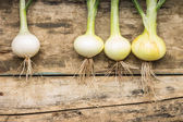 Fresh onion on wood weathered background. Outstanding from the crowd. — Stock Photo