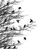 Tree silhouette with birds — Cтоковый вектор