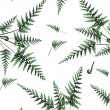 Royalty-Free Stock Vector Image: Beautiful background with fern