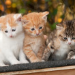 Three Kitten — Stock Photo #14096325
