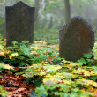 Old Gravestone — Stock Photo #14170036