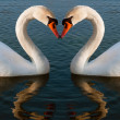 Stock Photo: Swans heart