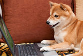 Dog with laptop — Stock Photo