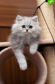 Kitty sitting on the cat house — Stock Photo