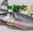 Stock Photo: Pike perch