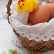 Chicken in the easter basket — Stock Photo