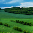 Green scenery landscape fields in spring time under clue cloudy sky — Stock Photo #26330931