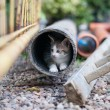 Stock Photo: Young kitty in pipe