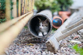 Young kitty in the pipe — Stock Photo