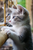 Curious young kitten — Stock Photo