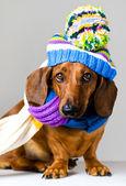 Hund in gap — Stockfoto