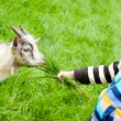 Boy and goat — Stock Photo