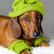 Stock Photo: Dog in green hat