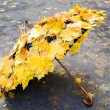 Stock Photo: Autumn umbrella