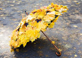 Autumn umbrella — Stock Photo
