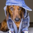 Dog in cotton cap - Stock Photo