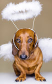 那条狗 — 图库照片