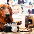 Dog with camera - Stock Photo
