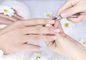 French manicure for female — Stock Photo