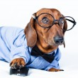 Dog with computer mouse — Stock Photo