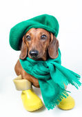 Dog in green scarf — Stock Photo