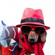 Dog in stylish red hat — Stock Photo #20907963