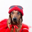 Stylish dog in red suit — Stock Photo #20907969